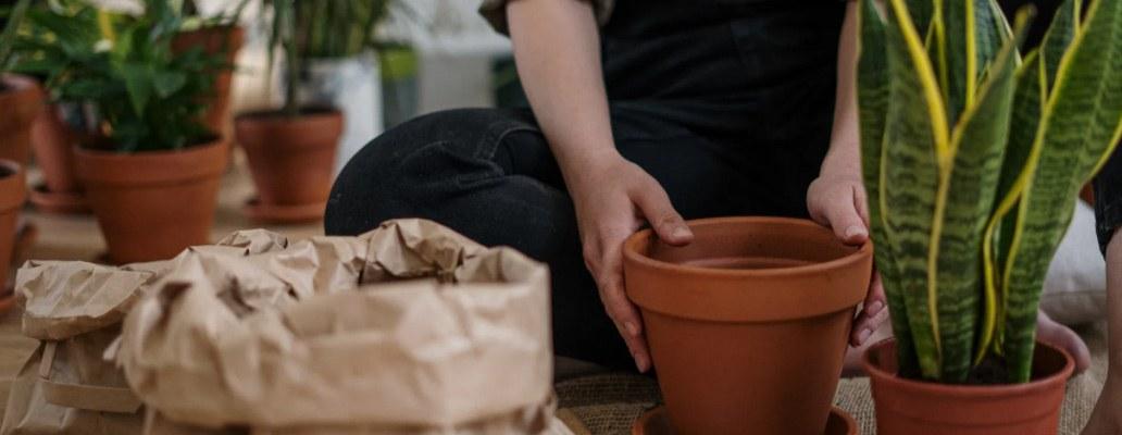 planten en tuinonderhoud