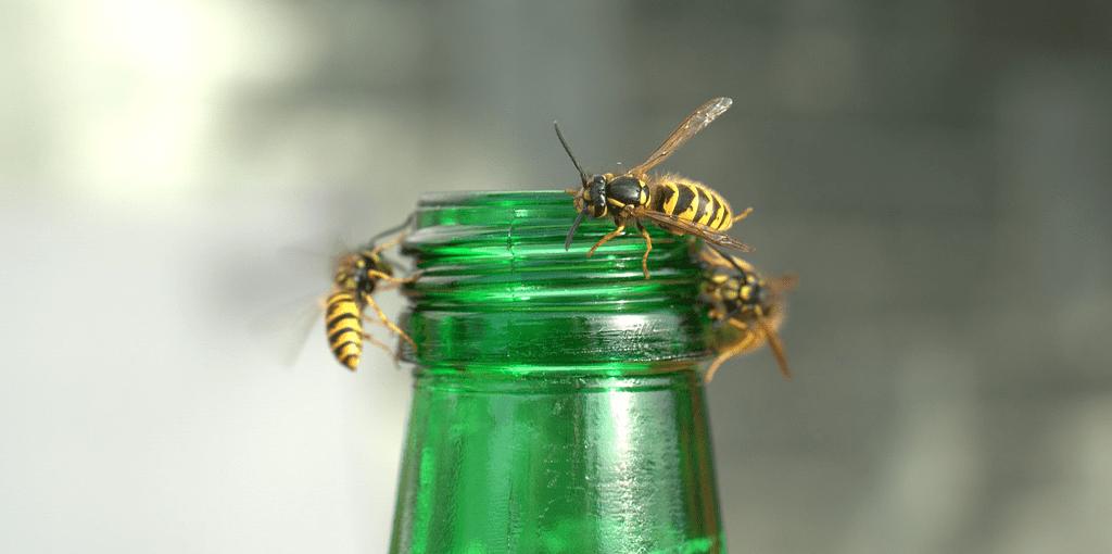 wespen verjagen