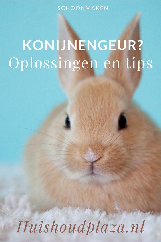 geur konijn konijnenhok
