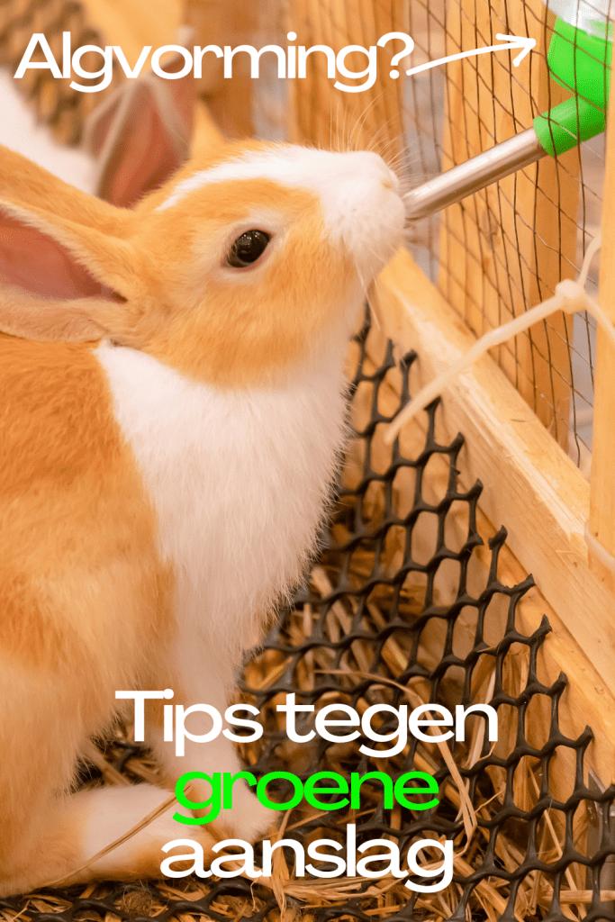tips tegen groene aanslag drinkfles huisdieren